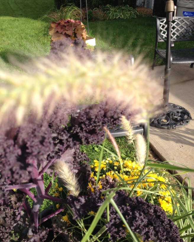 I love the hint of purple in the grass playing with the deep purple of the Kale