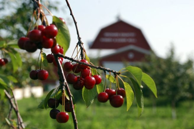 Photo Credit to DoorCounty.com/Door County Visitor Bureau Orchard Country Winery and Market ripe cherries w/barn